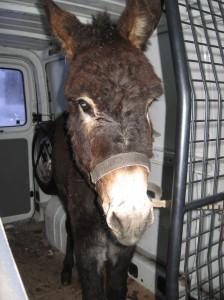 Camilla nach dem Kauf, im Transporter