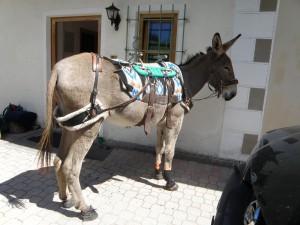 Biscotte Sommer 214 Südtirol